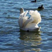 Swan 001 Art Print