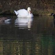 Swan And Geese Art Print