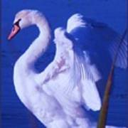 Swan At Cape May Point State Park  Art Print