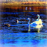 When It Seems Like The Swans Are Ruling The Sea  Art Print by Hilde Widerberg