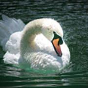 Swan Bow Art Print