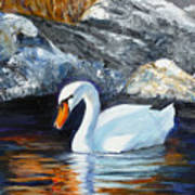 Swan By Rocks Art Print