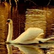 Swan Dance Art Print