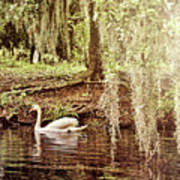Swan Dreams Art Print