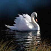 Swan Elegance Art Print