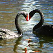 Swan Heart  Art Print