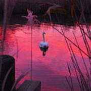 Swan In A Sunset Art Print