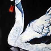 Swan In Shadows Art Print