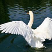 Swan Moment Art Print