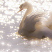 Swan Of The Glittery Early Evening Art Print