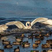 Swan Wings Reach Art Print