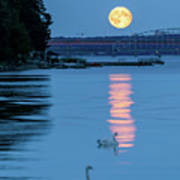 Swans And The Moonrise In Stockholm Art Print