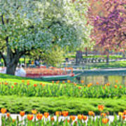 Swans And Tulips 1 Art Print
