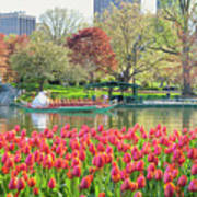 Swans And Tulips 2 Art Print