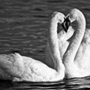 Swans Print by Brandon Broderick