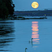 Swans Gliding Into The Moonlight During A Moonrise In Stockholm Art Print