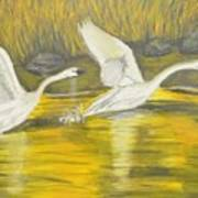 Swans In The Fall In Montana Art Print
