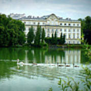 Swans On Austrian Lake Art Print