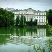 Swans On Austrian Lake Art Print