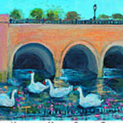Swans On The Charles River Art Print