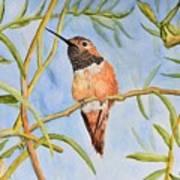 Sweet Hummingbird Art Print