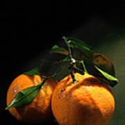Sweet Orange Art Print