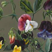 Sweet Peas And Violas Art Print
