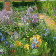 Sweet Rocket - Foxgloves And Irises Art Print