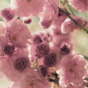 Sweet Spring Blossoms Art Print