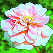Sweetheart Rose On A Sunny Day Art Print