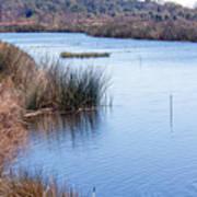 Sweetwater Wetland Pond Art Print