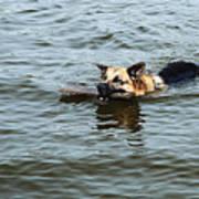 Swimming Dog Art Print
