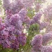 Swimming In A Sea Of Lilacs Art Print