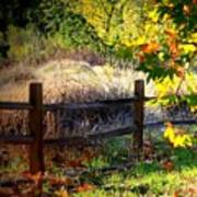 Sycamore Grove Fence 1 Art Print