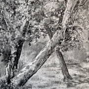 Sycamore Tree In Goliad State Park Art Print by Karen Boudreaux