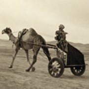 Syria: Camel Race, C1938 Art Print