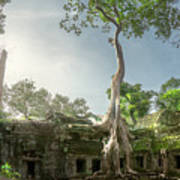 Ta Prohm Temple  Art Print
