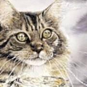 Tabby Cat Jellybean Art Print