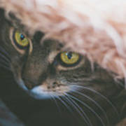 Tabby Cat Looking From Beneath A Blanket  Art Print