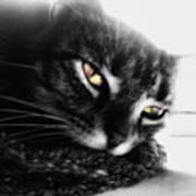 Tabby Cat Selective Color Art Print