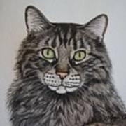 Tabby-lil' Bit Art Print