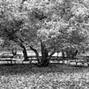 Tables And Tree Art Print