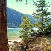 Tahoe Pines Art Print