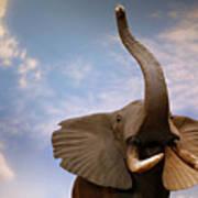Talking Elephant Art Print