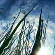 Talking Reeds Art Print