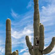 Tall Cacti Art Print