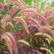 Tall, Colorful, Whispy Grasses In The Sumer Breeze Art Print