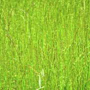 Tall Grassy Meadow Art Print