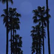 Tall Palm Trees In A Row Art Print