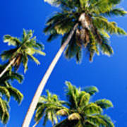 Tall Palms Art Print